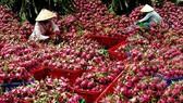 """Nông sản Việt Nam """"được lòng"""" thị trường Ấn Độ"""