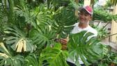 Tới lượt cây kiểng có giá tiền tỉ mỗi lá