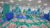 Nhiều DN xuất khẩu cá tra, basa được Mỹ dỡ bỏ áp thuế chống bán phá giá