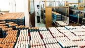 Sẽ không áp dụng hạn ngạch thuế quan nhập khẩu muối và trứng gia cầm có xuất xứ từ các nước ASEAN
