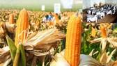 Cảnh báo về tình trạng nguồn gen cây trồng, vật nuôi bản địa bị suy giảm