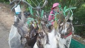 Thực tế lây lan dịch bệnh giữa động vật hoang dã và con người gia tăng và tình trạng kháng thuốc kháng sinh ngày càng phổ biến
