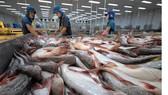 Hơn 90% sản lượng cá tra và tôm nước lợ tập trung tại vùng Đồng bằng sông Cửu Long