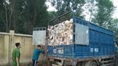 Công an bắt quả tang 7 xe chở hàng chục tấn rác thải ra môi trường