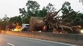 ô tô chở 3 cây gỗ khủng lưu thông trên Quốc lộ 1A đoạn qua địa bàn tỉnh Thừa Thiên - Huế