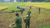 Công an xuống đồng thu hoạch lúa giúp dân đang cách ly y tế