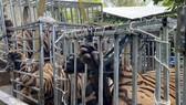 Phát hiện 17 con hổ nuôi nhốt trái phép trong nhà dân ở Nghệ An