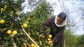 Nghệ An hỗ trợ nông dân đưa sản phẩm lên sàn thương mại điện tử