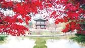 Du ngoạn xứ Hàn đón Tết Trung Thu chỉ với 12,99 triệu đồng