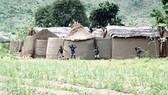 Từ nhà bùn Ghana đến compound house