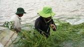 Đắk Lắk: Gồng mình đắp đê cứu hơn 1.000ha lúa