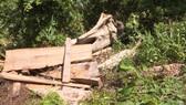 Xem xét kỷ luật giám đốc công ty lâm nghiệp để mất rừng