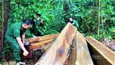 Đắk Lắk: Phát hiện nhiều vụ phá rừng quy mô lớn