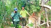 Bắt Trạm trưởng Trạm Kiểm lâm nhận 35 triệu đồng để lâm tặc phá rừng