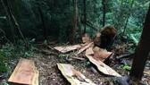 Rừng Ngọc Hồi tiếp tục bị tàn phá