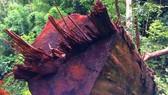 Rừng xã Đắk Long bị phá