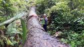 """Vụ """"Phá nát rừng Kbang"""": Chốt giữ rừng không bảo vệ được rừng"""