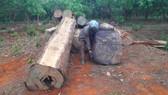Truy tìm chủ gỗ cất giấu dưới lòng hồ thủy điện Sê San 3A