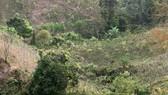 Vụ xe khách lao xuống vực tại đèo Lò Xo: Thiết bị giám sát hành trình không hoạt động
