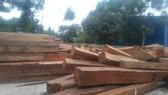 Bắt một giám đốc công ty tàng trữ hàng chục khối gỗ lậu