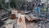 Gia Lai điều tra việc phá rừng để trồng rừng