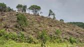 Thuê người phá rừng để… trồng rừng