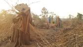 Cục Kiểm lâm chỉ đạo kiểm tra vụ phá rừng ở vành đai biên giới Ia O