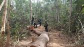 Một xã để mất 850ha rừng, chi sai gần 1 tỷ đồng