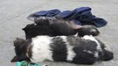 Bị đánh tử vong nghi do trộm chó