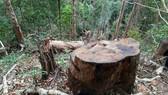 Điều tra vụ lâm tặc xẻ thịt 45m³ gỗ trái phép