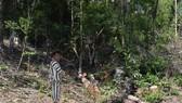 Chủ tịch tỉnh tặng bằng khen 2 cán bộ công an vì chiến tích truy bắt băng nhóm cưa hạ 103m³ gỗ