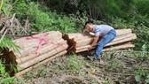 Đề nghị kiểm điểm trách nhiệm 2 ban quản lý rừng vì để phá rừng