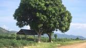 Điều tra vụ kiểm lâm bị đâm khi mật phục để bắt gỗ lậu