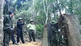 Vụ cưa hạ hơn 49m³ gỗ ở Gia Lai: Khởi tố 4 lâm tặc