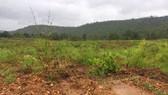 Khởi tố vụ hủy hoại gần 12ha rừng ở Gia Lai