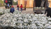 """Capital  """"rescues"""" unsellable produce from pandemic-stricken province"""