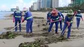 Đà Nẵng thu gom hơn 1.300 tấn rác phát sinh do bão số 5