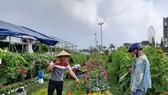 Giá các loại hoa, cây cảnh, quất giảm khoảng 20-30% so với năm ngoái