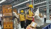 Khai trương hệ thống chia chọn bưu phẩm tự động tại miền Trung