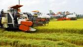 Đầu tư công nghệ tạo đột phá cho hạt gạo