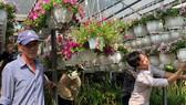 Chăm sóc hoa tại một vựa hoa kiểng trên đường Phan Huy Ích (quận Gò Vấp)