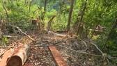 Nhiều diện tích rừng bị chặt phá