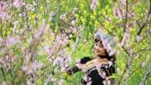 Giới trẻ ngỡ ngàng trước vẻ đẹp Fansipan mùa Xuân