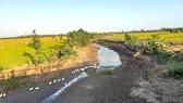 Nhiều kênh mương ở Tiền Giang khô kiệt, ảnh hưởng đến vụ lúa đông xuân. Ảnh: TÍN HUY