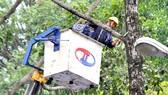 Nhân viên Công ty TNHH MTV Công viên cây xanh TPHCM mé nhánh cây trên đường Tô Hiến Thành, quận 10. Ảnh: NGUYỄN NHÂN