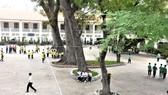 Tìm giải pháp tối ưu quản lý cây xanh trong trường học