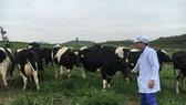 Trong vài năm gần đây, ngành chăn nuôi bò sữa đạt tiến bộ nên sản phẩm sữa Việt Nam đã xuất khẩu đi nhiều quốc gia