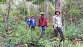 Cả năm giữ rừng chỉ nhận được 9 triệu đồng/hộ