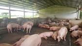 Việt Nam chuyển sang chăn nuôi hiện đại, hướng tới xuất khẩu