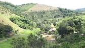 Rừng phòng hộ Gia Nghĩa tại Tiểu khu 1697 bị người dân lấn chiếm làm rẫy